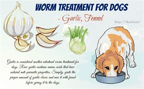 10 tips for intestinal worm treatment for dogs