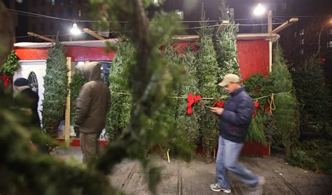 christmas tree vendors set up shop on new york city s