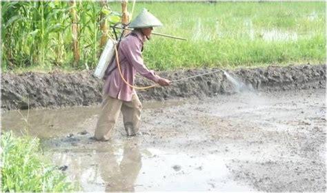 cara membuat yuyu menjadi gembur tanah sehat tanaman kuat suplemen dan pupuk organik cair