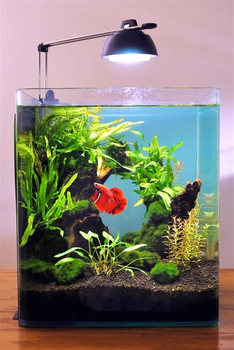 Small Aquarium Aquascape by 25 Best Ideas About Nano Aquarium On Betta