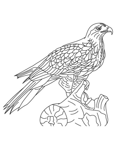 hawk coloring pages hawk coloring pages to and print for free