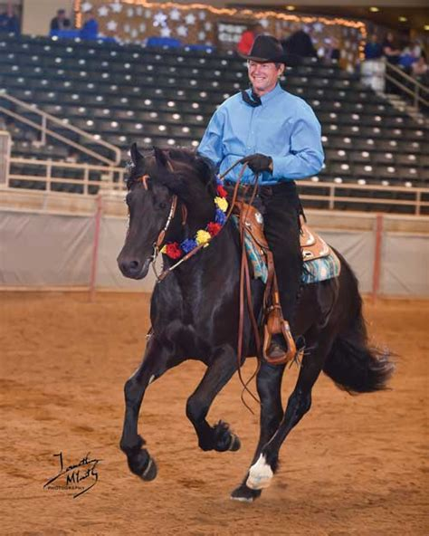 Section D Welsh Cob Welsh Pony Cob Society Of America