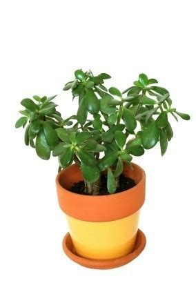 filler ideas  potted plants thriftyfun