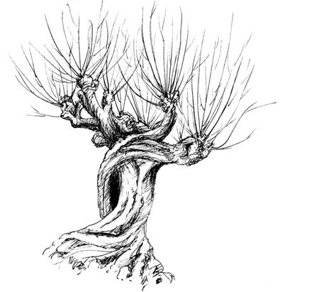 whomping willow tattoo 7 nominees for the best tree in literature atlas obscura