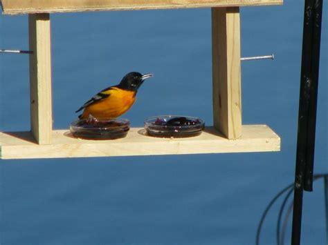 1000 images about bird feeders on pinterest bird