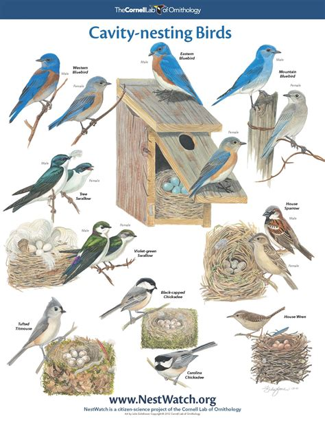 Essay On Different Types Of Birds In by Different Types Of Birds Breeds Picture