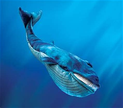 Minyak Ikan Paus ikan paus raksasa m agus daniawan