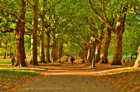 background green park london green park avenue in autumn it s a mixture of green and