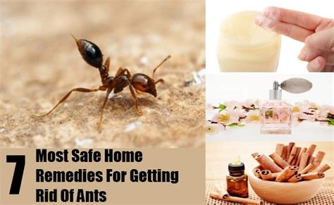 home remedy for getting rid of ants carpenter ants