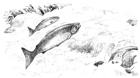 salmon fish coloring pages salmon coloring pages sketch coloring page