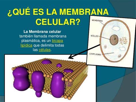 que es layout celular membrana celular