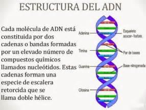 numero de cadenas en el adn y arn estructura del adn solo ciencia