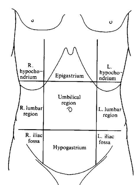 abdomen diagram image gallery diagram abdomen