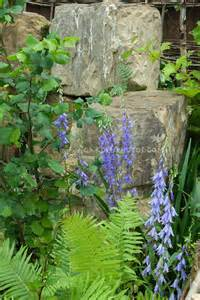 Rock Garden Plants For Shade Canula Latifolia With Ferns And Rocks Plant Flower Stock Photography Gardenphotos