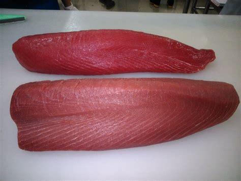 Fish Tuna Loin parlevliet paraba seafood
