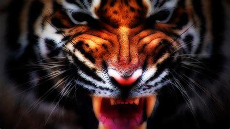 3d Home Design Game Free tiger roar wallpaper high quality wallpapers wallpaper