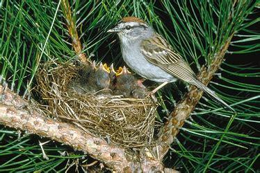 the soul the bird, the body the nest | ordinary sparrow