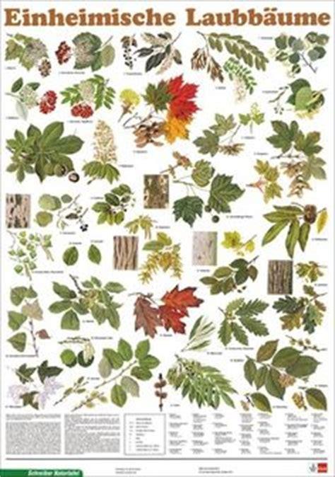Garten Pflanzen Bestellen 647 by Pin Auf Waldtiere