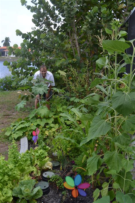 Gardening Questions Issues And Problems Our Garden Woes Gardening For Beginners Florida Garden