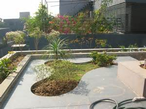 Bonsai Trees and Plants in Ahmedabad for Sale: garden design services