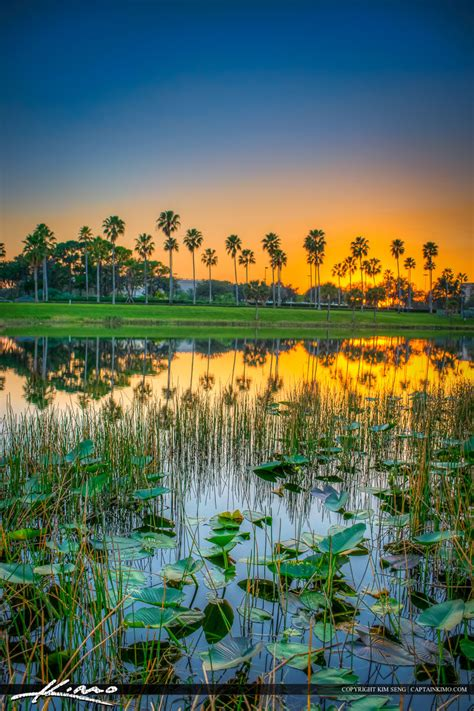 Palm Gardens Florida Weather by Palm Gardens Mall Sunset At Lake