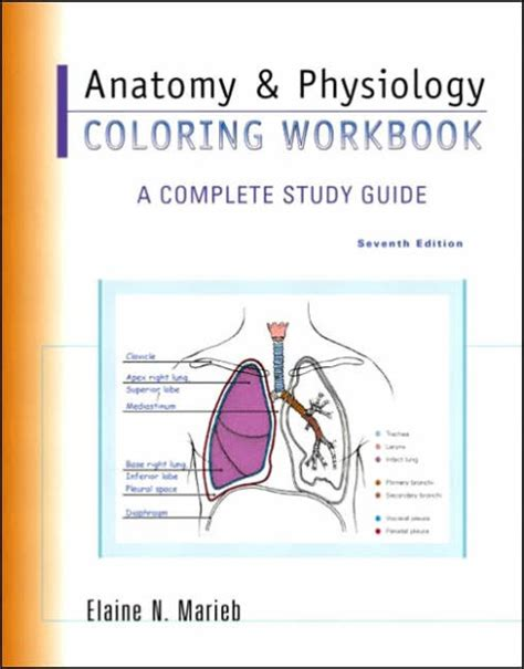 anatomy and physiology coloring book 10th edition answers anatomy physiology coloring workbook a complete study