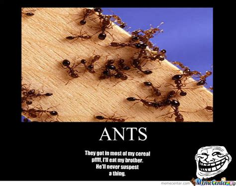 Ant Meme - ants by unovach0000 meme center