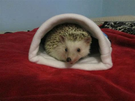 hedgehog bed the only bed my pet hedgehog will use laurelszoo snuggle