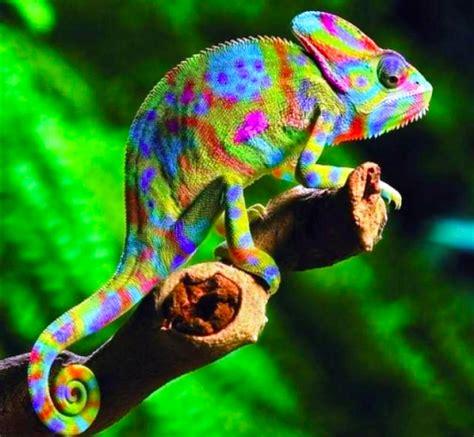 imagenes animales exoticos hermosos el comportamiento de los animales quot ex 243 ticos quot revista