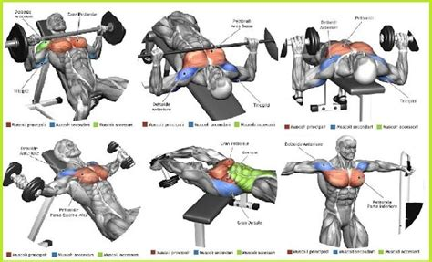 best chest exercises workout chart seasons chest muscles and the o jays