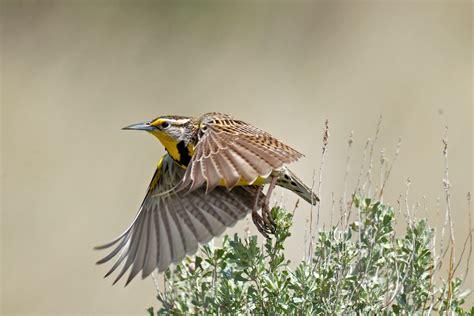state birds state birds birdnote