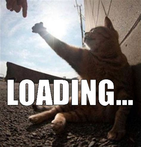 Loading Meme - gravitational waves maze and funny cats pokies new