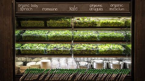 Sweet Green sweetgreen is targeting new york for even more locations