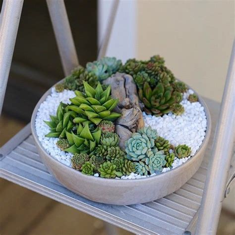 Indoor Succulent Garden » Home Design 2017
