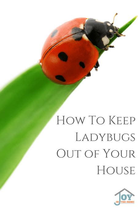 ladybugs in my house how to keep ladybugs out of your house joy in the home