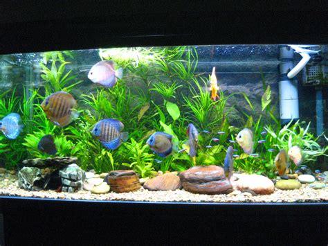Lu Aquarium Dalam Air definisi dan sejarah akuarium definisi dan sejarah akuarium