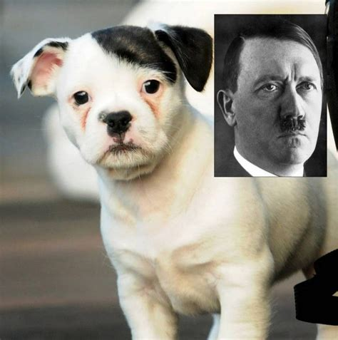 patch puppy patch the puppy is still adorable despite looking like adolf metro news