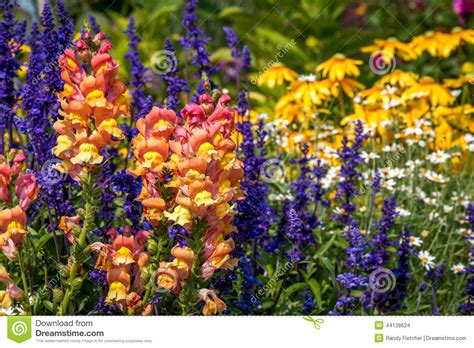 summer flower garden summer flower garden stock photo image 44138624