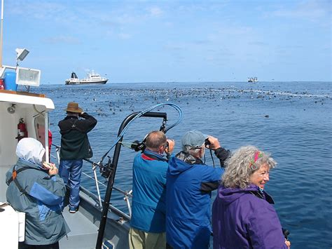 seabirds from boats pacific nw birder