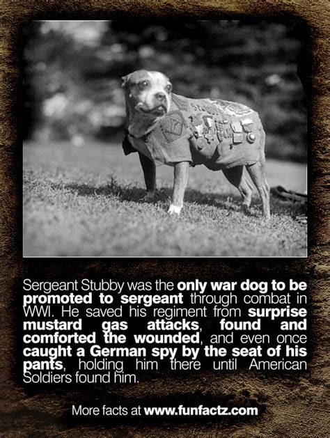 Sergeant Stubby Info Sergeant Stubby Was The Only War To Be Promoted To Sergeant Through Combat In Wwi He Saved