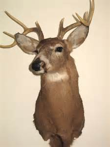 Real Deer Head Wall Mount Taxidermy Deer Head 8 Point Buck Wall Mount