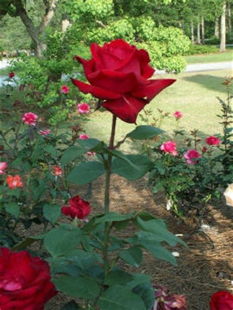 most difficult plants to grow tips on growing roses orchid flowers