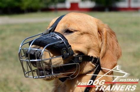 golden retriever muzzle purchase wire basket muzzle walking muzzles australia