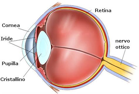occhio interno le 100 sfumature di iride dell occhio heliantus