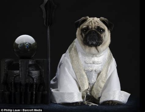 dressed up pug pugs dressed up as lotr characters things