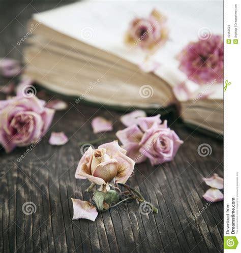 imagenes de rosas secas rosas secas y libro viejo imagen de archivo imagen de