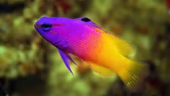 saltwater freshwater fish store weekend