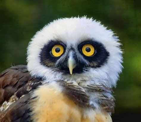 10 Amazing Portraits Of Animals by 15 Amazing Animal Photos Animal Stories