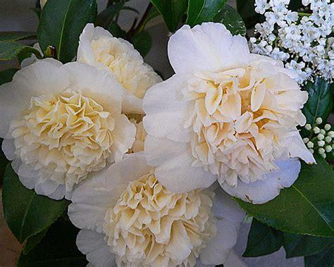 imagenes flores invierno flores de invierno elige la tuya
