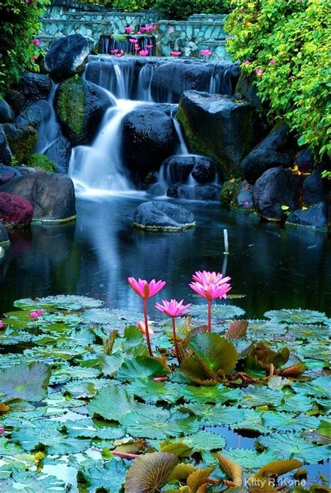 beautiful waterfalls with flowers lotus and waterfall in bali amazing world pinterest